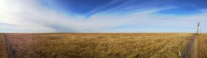 regenerative-plains